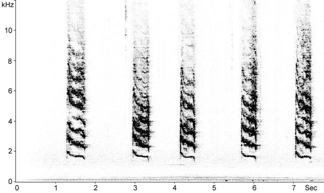 Sonogram of Gray Catbird calls