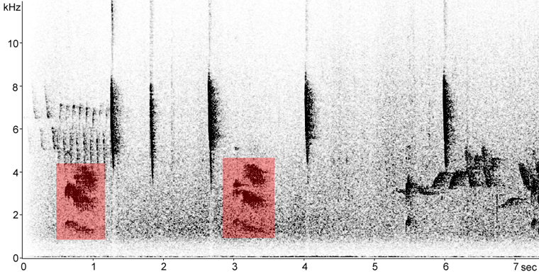 Sonogram of Gray Jay calls