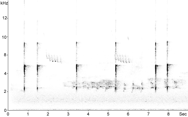 Sonogram of Great Spotted Woodpecker calls