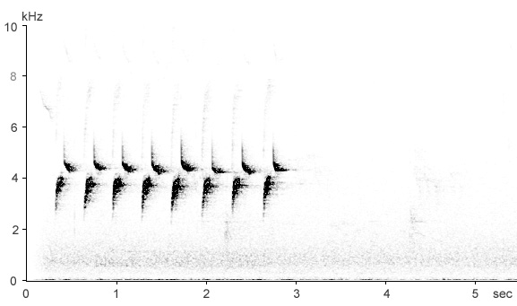 Sonogram of Great Tit song