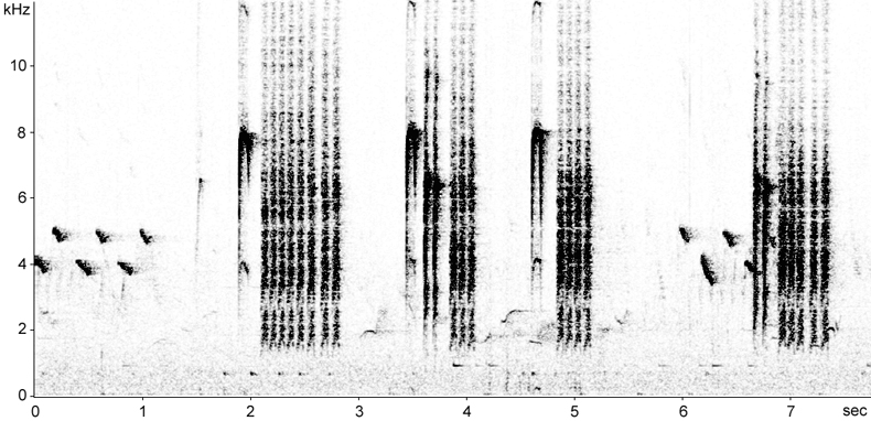 Sonogram of Great Tit calls