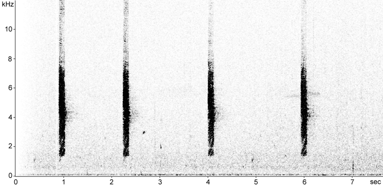 Sonogram of Grey Fantail calls