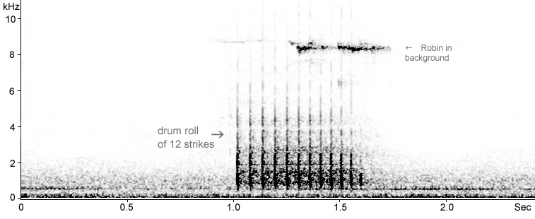Sonogram of drumming Great Spotted Woodpecker