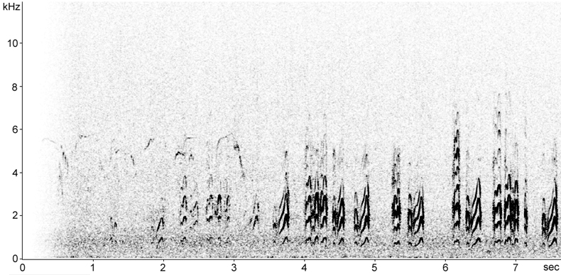 Sonogram of Gull-billed Tern calls