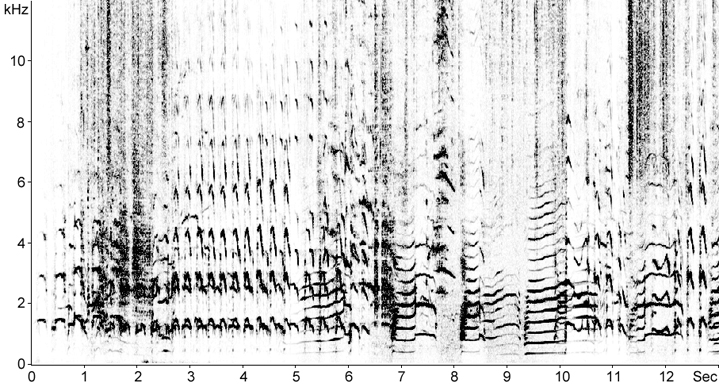 Sonogram of Herring Gull calls