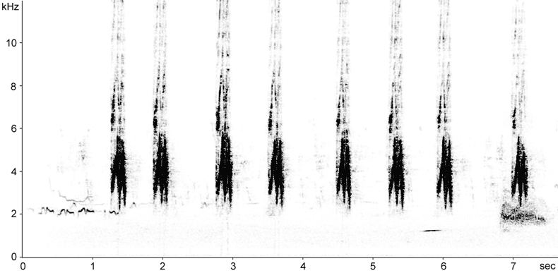 Sonogram of House Sparrow song