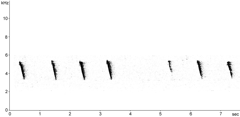 Sonogram of Iberian Chiffchaff call