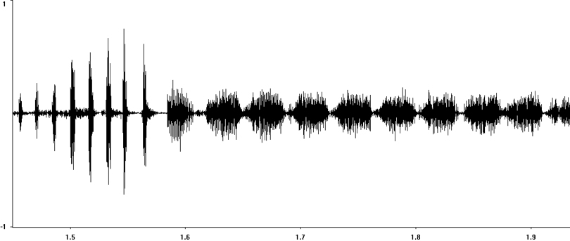 Oscillogram of Ladder Grasshopper stridulation