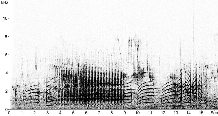 Sonogram of long calls from a Lesser Black-backed Gull