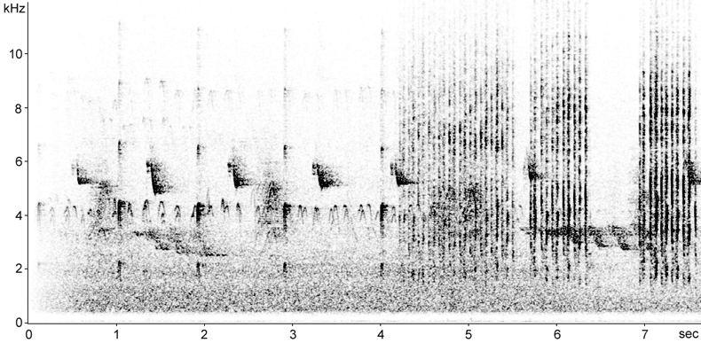 Sonogram of Lesser Spotted Woodpecker calls