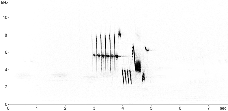 Sonogram of Little Bunting song