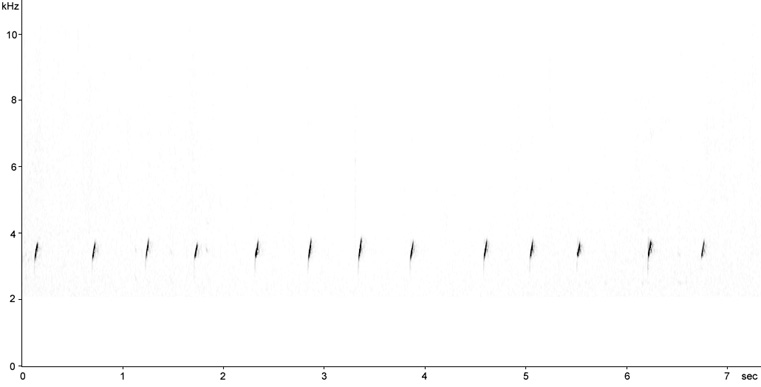 Sonogram of Little Grebe calls