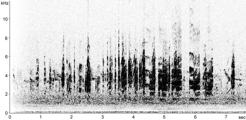 Sonogram of Little Tern calls