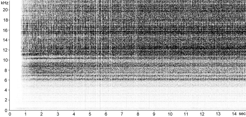 Sonogram of Long-winged Cone-head stridulation [longwingedconehead117303capcut2]