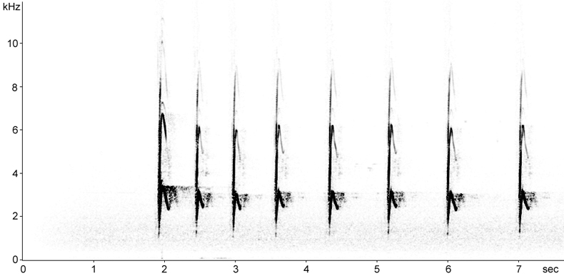 Sonogram of Alpine Marmot alarm calls