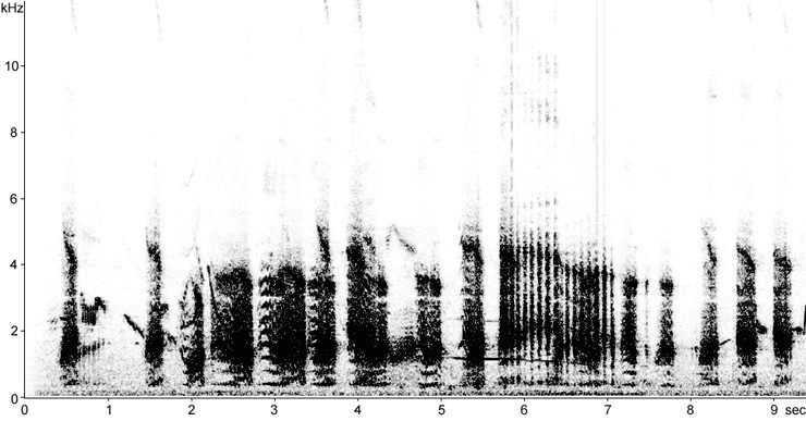 Sonogram of Marsh Frog song