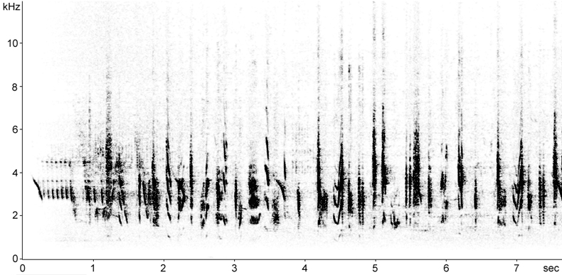 Sonogram of Masked Shrike song