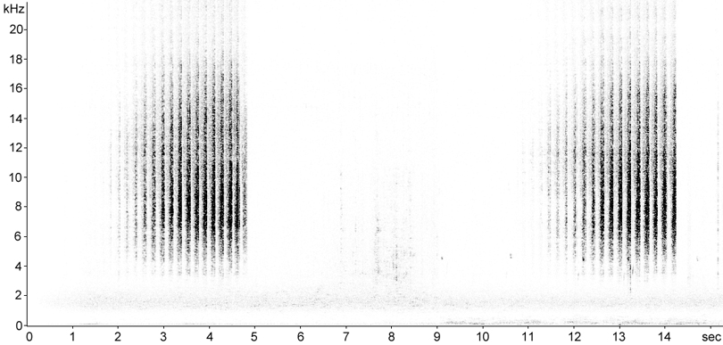 Sonogram of Meadow Grasshopper stridulation