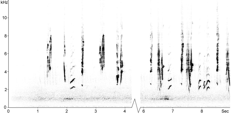 Sonogram of Melodious Warbler calls