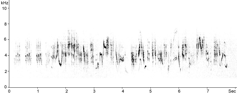 Sonogram of Melodious Warbler song