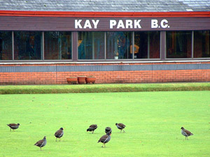 Moorhens on the bowling green