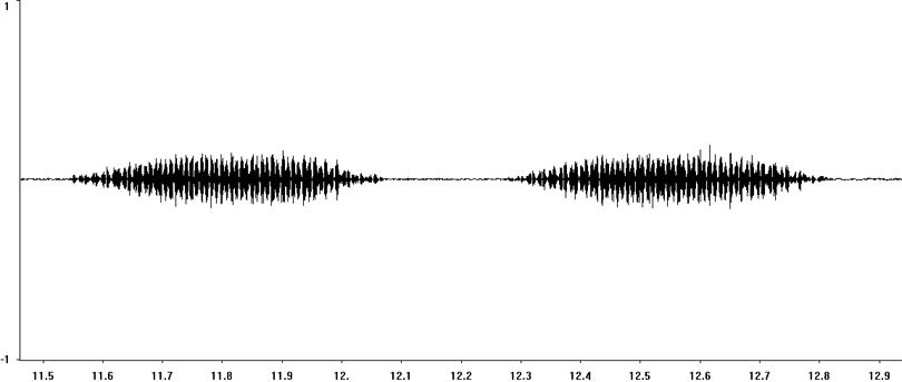 Oscillogram of Mottled Grasshopper stridulation