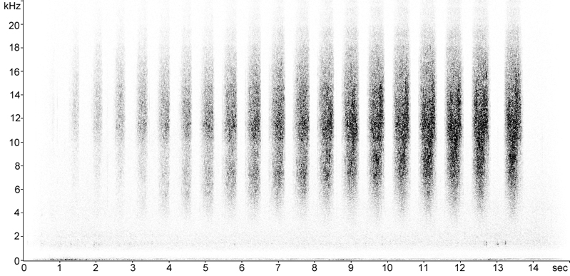 Sonogram of Mottled Grasshopper stridulation