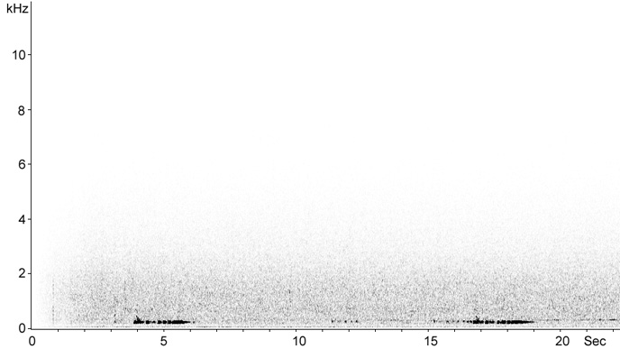 Sonogram of New Caledonian Imperial-Pigeon song