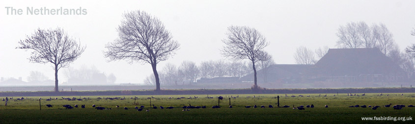 Winter Goose Fields in the Netherlands �05 Fraser Simpson