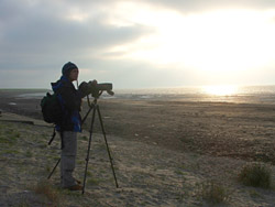 Watching Snow Buntings, Harlingen, Friesland