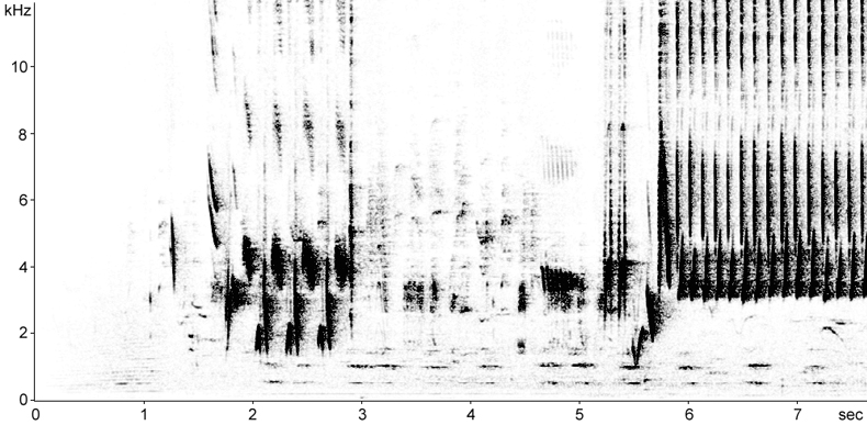 Sonogram of Nightingale song