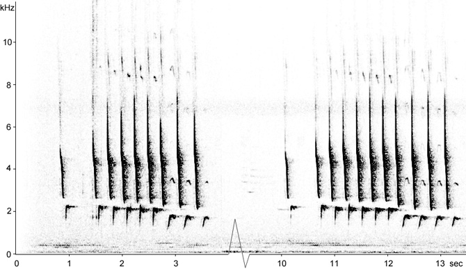 Sonogram of Northern Cardinal song