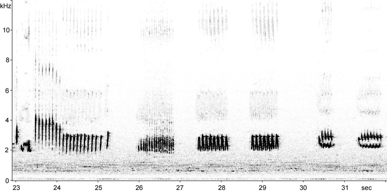 Sonogram of Northern Mockingbird song