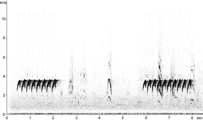 Sonogram of Nuthatch song