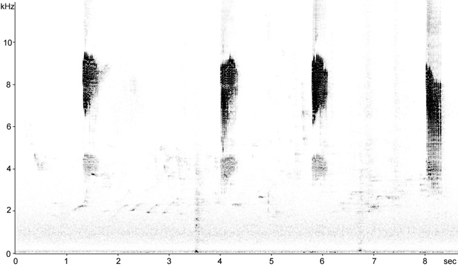 Sonogram of Nuthatch call