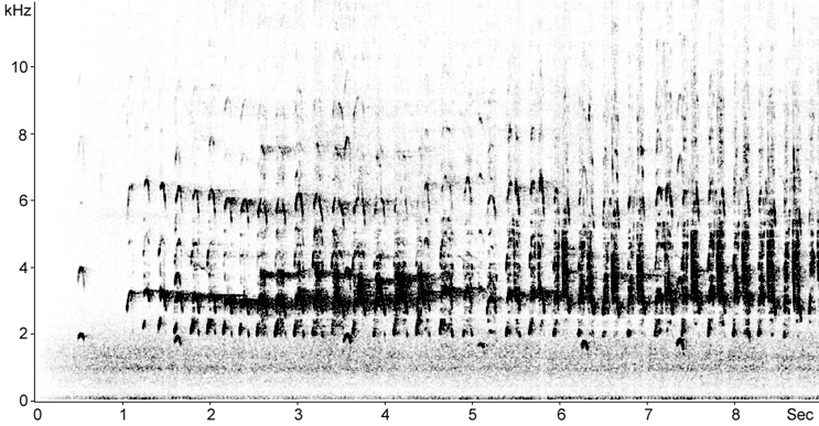 Sonogram of Osprey calls