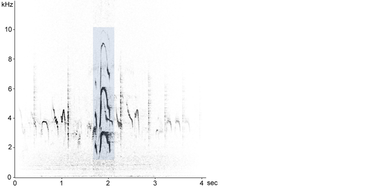 Sonogram of Oystercatcher flight call