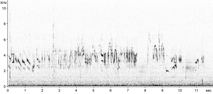 Sonogram of Paddyfield Warbler song
