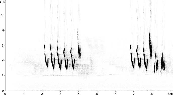 Sonogram of Pied Flycatcher song