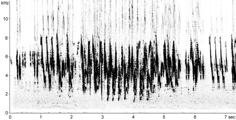 Sonogram of Pied Wagtail song