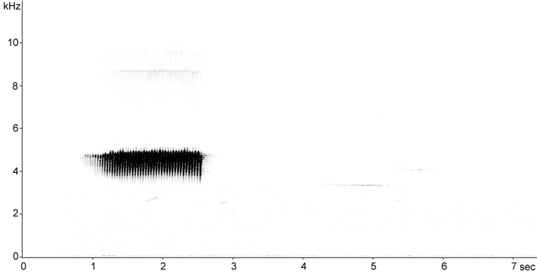 Sonogram of Pine Warbler song