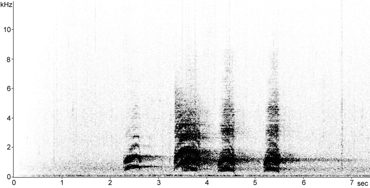 Sonogram of Hermit Thrush song