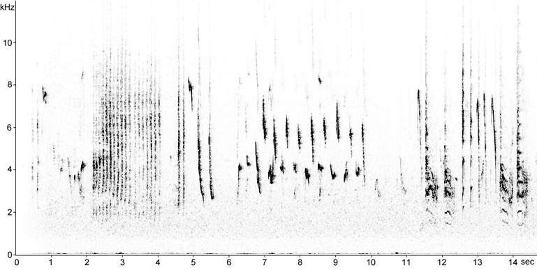 Sonogram of Red-backed Shrike song