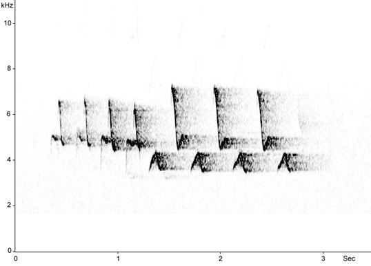 Sonogram of Red-breasted Flycatcher song