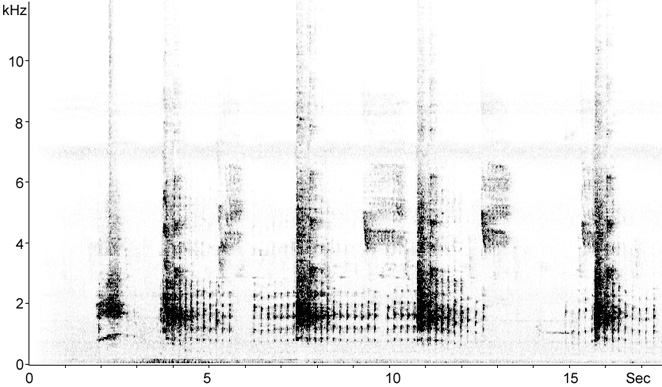 Sonogram of Red Junglefowl callls