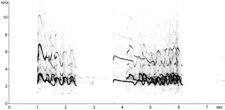 Sonogram of Red Kite calls