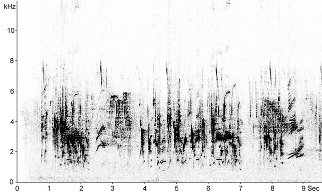 Sonogram of Red-rumped Swallow song