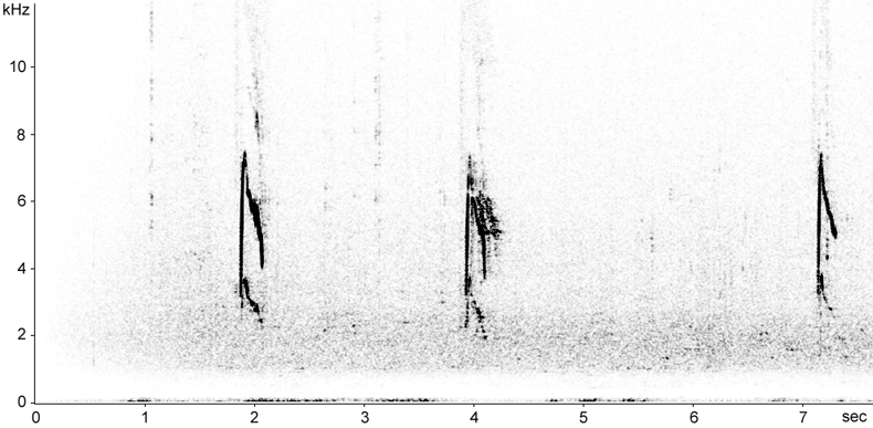 Sonogram of Red-throated Pipit flight calls
