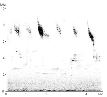Sonogram of Redwing calls