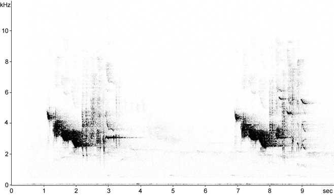 Sonogram of Redwing song